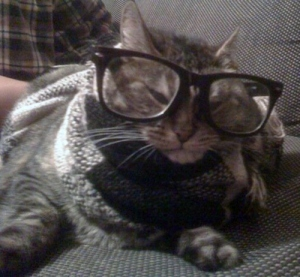 Real Hipster Cat Glasses